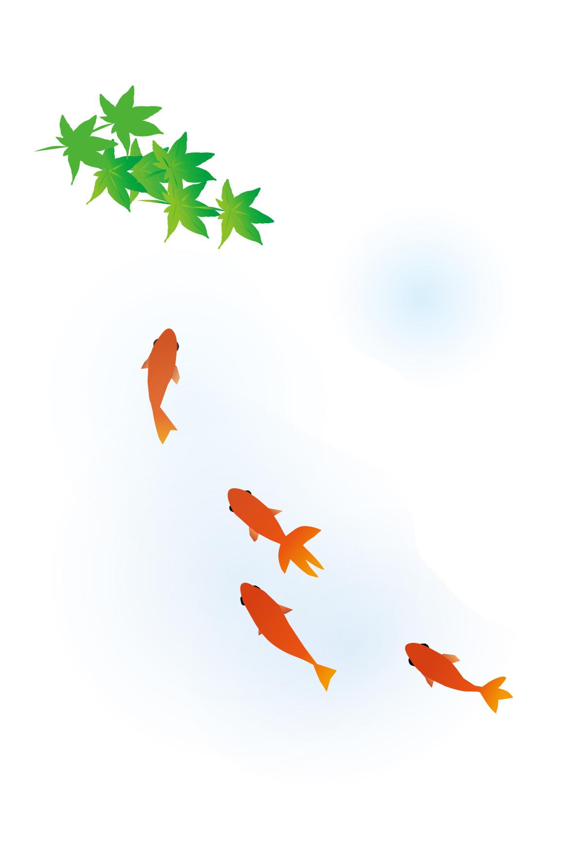 暑中見舞い無料素材/夏イラストはがき/金魚(和金魚)
